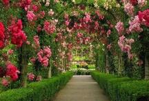 Floralspring / by Leigh Sasser
