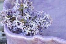 Violet Tulip / by Ulaola