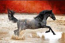 Unique Horses / by Levia L.