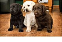 Adorable Pups / by Laurie Miller