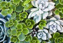 Secret Garden / by Ming Platt