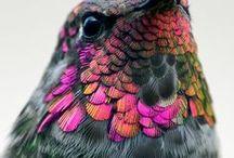Pretty Bird / by Ming Platt