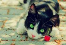 Cats & Kittens - Gatos y Gatitos / Just cutties - Puro Gato / by Violet McCartney