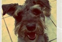 Cute / by Pepita's Pet