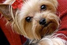 ~ animals that make me smile ~ / by joli pettit