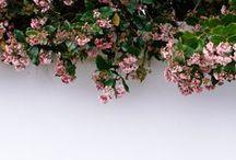 Bloom everywhere... / by snehitha seshadri