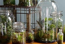 Steampunk botany... / ... and other uses for cloches and glass containers. / by Anna Meister