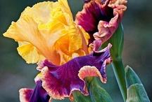 Celebrating Flowers ♡ / by Marihet Ferreira Viviers
