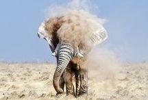 animales :) / by gaia minacori