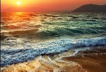 Ocean~~Sea Life / by June Jenison