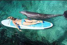 Praia em boa companhia / Bons momentos a gente tem que compartilhar! / by Billabong Women's Brasil