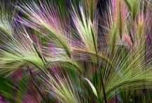 Monocot Border / I'm planning a grass border ~ Grasses and their companions. / by Diane Manton ✤