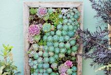 Garden goodness / by Elaine Kalal Stoner