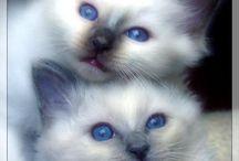 Ailurophile / Cats,my familiars!  / by Lindsey Sawbridge