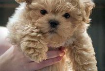 Cute Pets / by Linda Huot