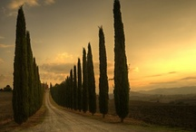 Tuscany / by Michal Rozen Bar