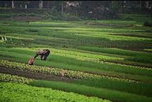 Vietnam / Vietnam travel photography by Around the Island Photography / by Robin Epstein