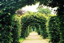 Garden / by Lindsey Pedone