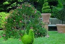 Gardening Ideas / by Patricia Kennard