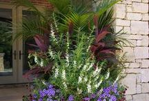 Flowers in containers / by Baldi Gardens, Inc.