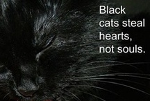 Black cats are beautiful / This cat lady refuses to buy cat calendars that don't feature black cats. / by Pantera's Mom