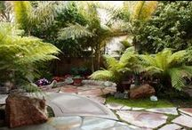 Tropical Gardens / Tropical landscaping / by Baldi Gardens, Inc.
