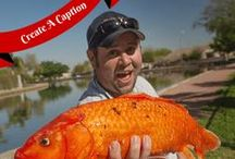 What's Fishing Today / Dedicated to fishing sports and all types of fishing adventures. Find hot fishing lures & tackles in the market. #Fishing / by Chris Kriag