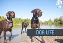 The Dublin Dog Life / Once you become part of the Dublin Dog family you understand, it's not just a brand... it's a lifestyle. And these pups are looking good living their Dublin Dog life! / by Dublin Dog Co.