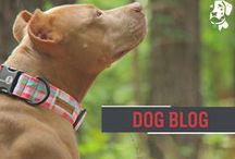 Dog Blog / At Dublin Dogs, we strive to bring you the very best in content and products for you and your favorite furry friend. / by Dublin Dog Co.