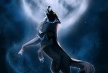 Artwork~Canines / by Ephphatha