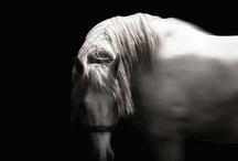 Animals / by Josie Cameron
