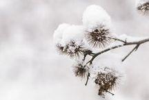 Winter / by M@yflower