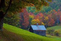 Automne (les feuilles tombent...les champignons et les couleurs / by Chantal LE FORBAN