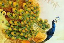 Peacock Art / Illustration,painting,drawing,pattern etc... / by Meral Cetin