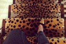 Leopard / by Debra Ackerbloom