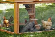 Chickens and coop inspirations / Ideas for my urban chicken coop. / by FolkHeart Primitives