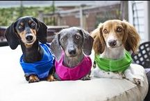 Rockin Dachshunds ... / by Donilee Neeley