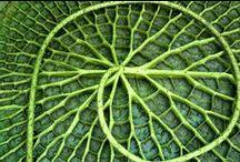 vegetal inspiration / by David Planquois