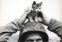 War Cats / by Liliane Banshee T