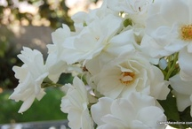 GARDEN Inspiration / California garden inspiration for my home. / by Christine (Sweet Macedonia)