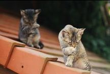 Cats / by Amanda Thomas
