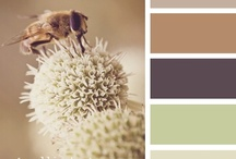 Color Palette Love / by Mandy Robinson