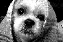 "Where Dogs Are, Family Is. / ""The More I'm Around People, The More I Love my Dog.""...I think Clara Bow said something close to this...and I tend to agree. / by Moxie Weinstein"