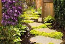 garden / by Anne McChristie