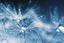 Dandelion clock / by Anne McChristie