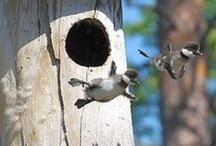 Birdhouses and feeders / by Chris Kelz