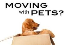 Moving Made Easy / Tips for a less stressful move into a new home / by GL Homes - New Homes in Florida