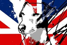 For Cash... / All things our Jack Russell, Cash, will enjoy! / by Katy McDaniel