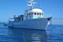 A Myti Adventure Reef Charters / Address:  14 Kevin Drive, Yeppoon QLD 4703 Phone:  +61 7 4939 8522 Email:  amytia@amytiadventure.com.au Web:  amytiadventure.com.au / by Queensland Ecotourism Directory