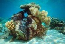 Big Cat Green Island Reef Cruises / Address:  Level 1, Reef Fleet Terminal 1 Spence Street, Cairns QLD 4870 Phone:  +61 7 4051 0444 Email:  info@greenisland.com.au Web:  www.greenisland.com.au / by Queensland Ecotourism Directory